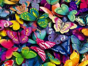 butterfly colors butterflies in you lupus in color
