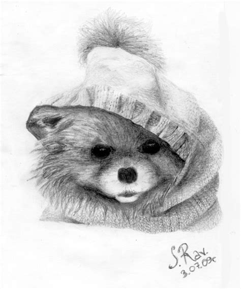 pomeranian drawing pomeranian by zw1138 on deviantart