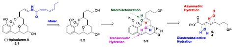 hydration synthesis research o doherty