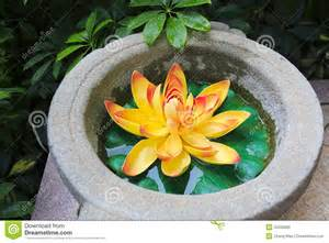 What Is The Golden Lotus Golden Lotus Flower Stock Photo Image 43330060