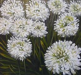 flowers land white agapanthus