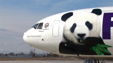 25 Reasons To Fall how do pandas play into canada s relationship with china