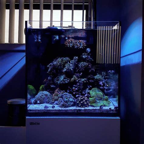 Lu Fluorescent Untuk Aquarium aquariumair s diary