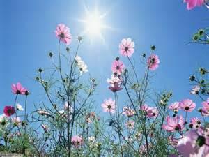 fiori prato slideshow foto fiori di prato settemuse it
