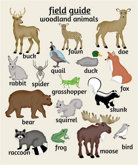 Printable Animal Poster | woodland animal poster field guide series alley kids