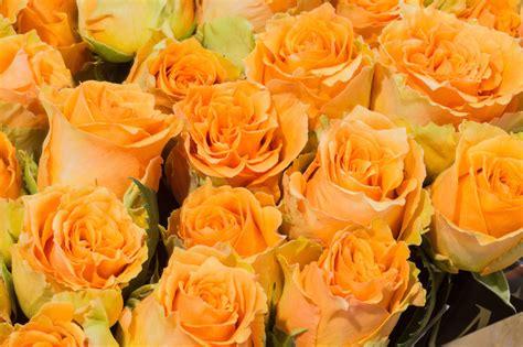 significato fiori rosa alla scoperta significato dei fiori una guida per non