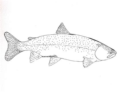 Brook Trout Coloring Page free coloring pages of brook trout