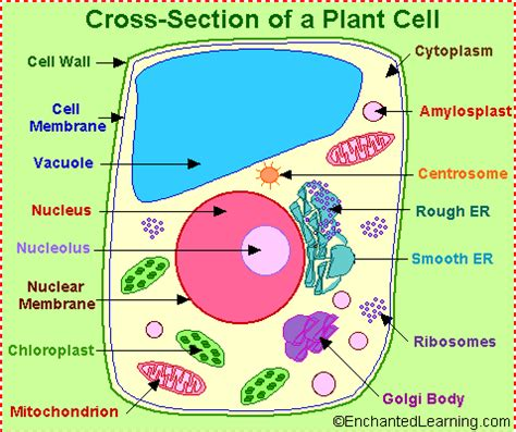 diagram of plant cell 301 moved permanently