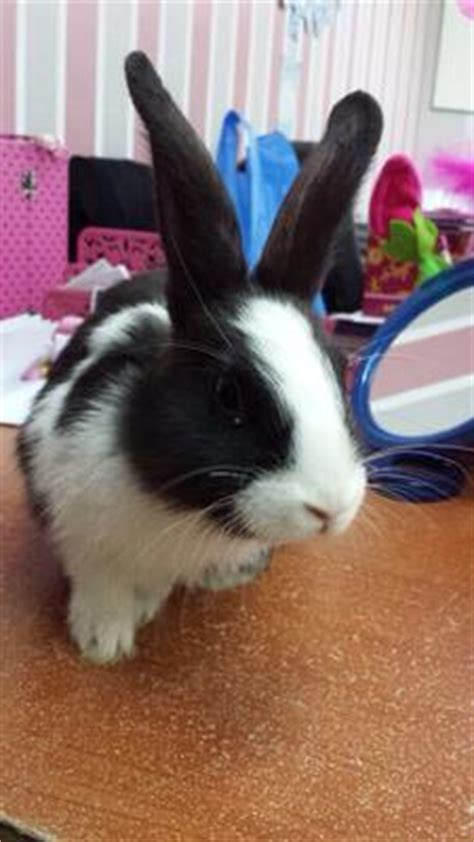 Help Me To Find My Help Me To Find Out My Bunnies Breeds