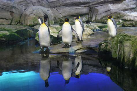 Zoologischer Garten Oder Tierpark by Pinguine Im Berliner Zoo Foto Bild Tiere Zoo