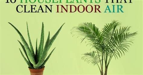 garden  farms  houseplants  clean indoor air