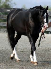 Barn Sour Horse 17 Best Images About Horses On Pinterest White Horses