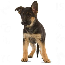 Royal Canin Maxi 15kg Rc Maxi Makanan Anjing Dewasa Gojek royal canin maxi junior active great deals at zooplus