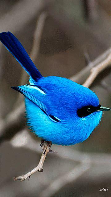 m shyamalan gifs search find make gfycat blue bird gifs search find make gfycat gifs