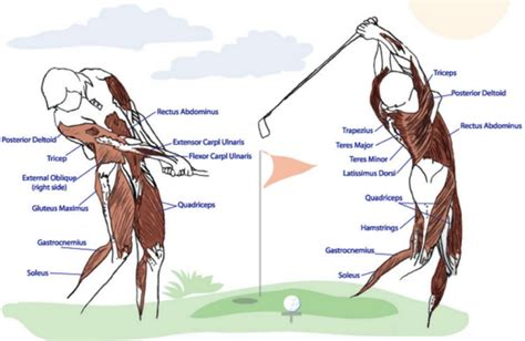 swing the golf club with your body services