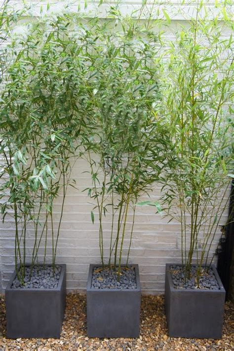 Bamboo In Polystone Planters Home Outside Pinterest Bamboo Planter Box