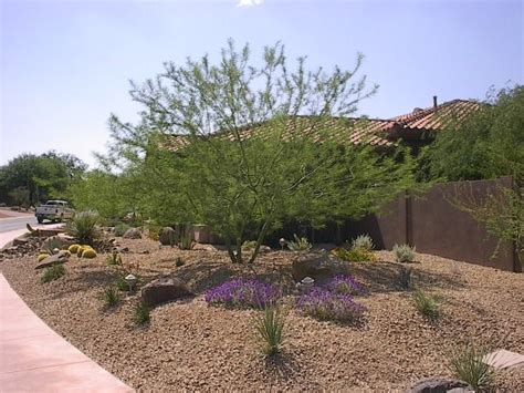 desert landscape ideas for backyards 25 best ideas about zero scape on desert