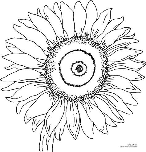 sunflower coloring pages 171 online coloring