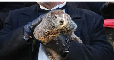 groundhog day spiritual meaning groundhog day repeat each time meaning 28 images