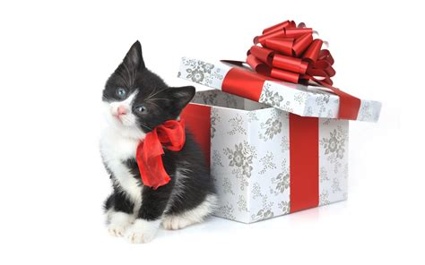 images of christmas cats funny image collection view funny cat christmas pictures
