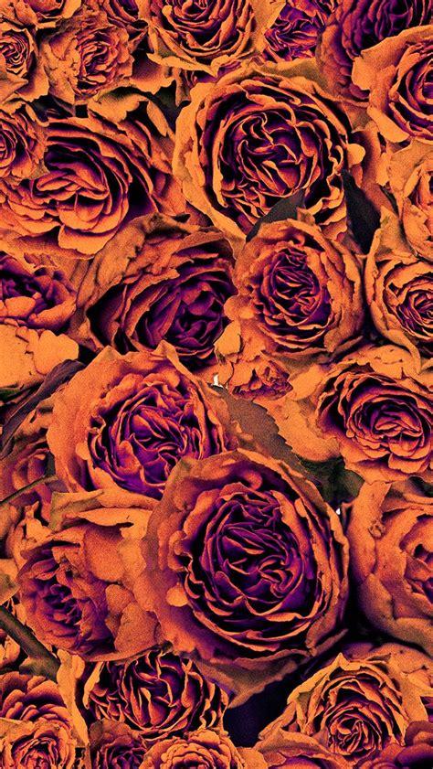 orange purple autumn floral roses iphone phone wallpaper