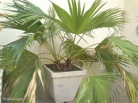 indoor house plants sale indoor house plants sale indoor houseplants for sale