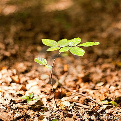 baby tree baby tree stock images image 10957674