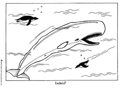 sperm whale coloring pages hellokids com