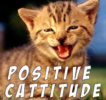 Good Luck Cat Meme - throw back thursday cat memes i can has cheezburger
