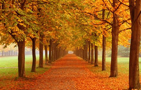The In Autumn autumn season falling leaves morewallpapers