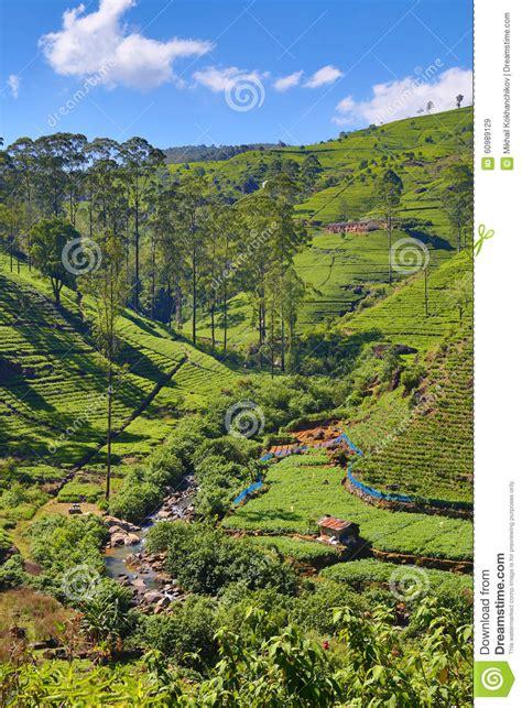 Paysage Sri Lanka by Paysage De Montagne Dans Sri Lanka Photo Stock Image