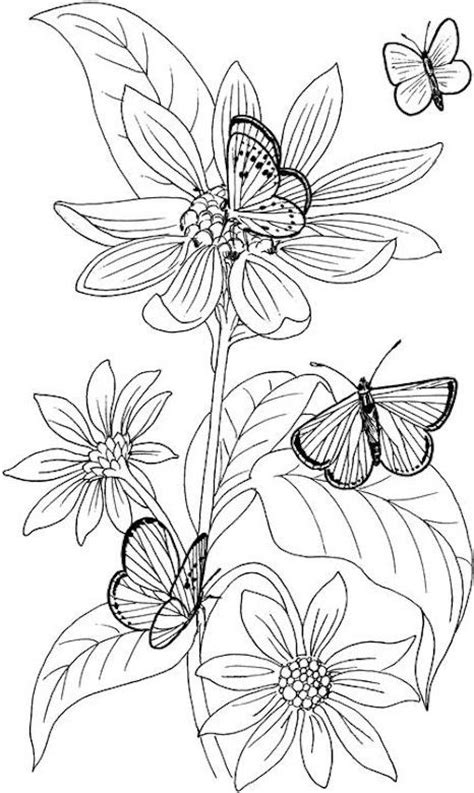 rainforest butterfly coloring pages 147 best images about jungle room on pinterest dovers