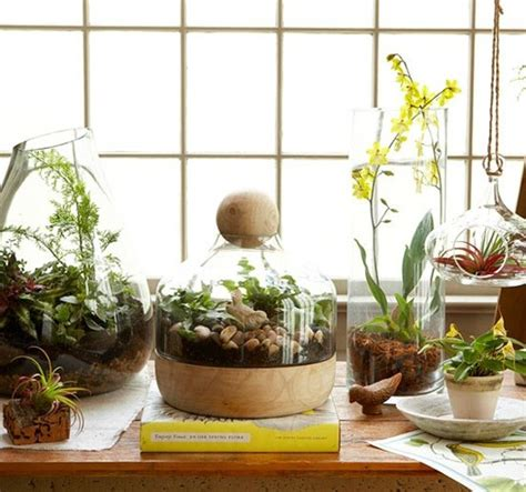 the 11 best plants to grow in your terrarium simplemost