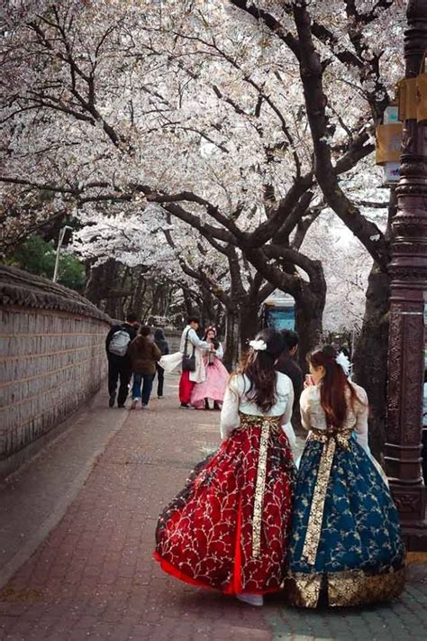 Dress Korea Cherry gyeongju cherry blossoms festival south korea cherry