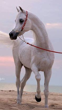1000 images about horse party on pinterest horse 1000 images about arabian horses on pinterest arabian