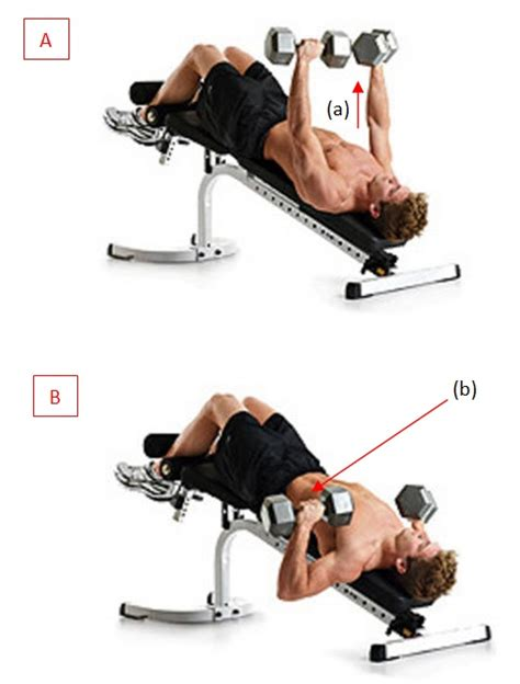what does decline bench workout 17 best images about bench press on pinterest pole dance
