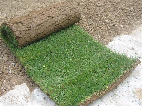 vendita tappeti erbosi produzione vendita diretta tappeti erbosi a bergamo zetti