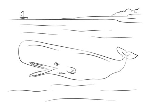 cute sperm whale coloring page free printable coloring pages