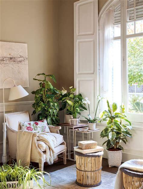 decora con plantas de interior decora con plantas sin mucho esfuerzo