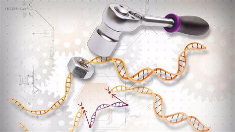 Human Embryo Gene Editing Endorsed For Research Orlando