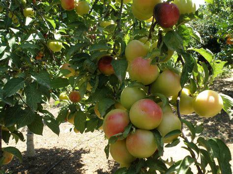 fruit garden botanical park of crete