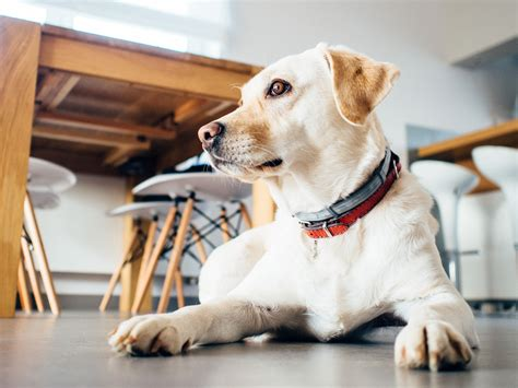best city dogs free stock photo of animal