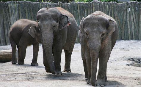 Oregon Zoo - Wikipedia