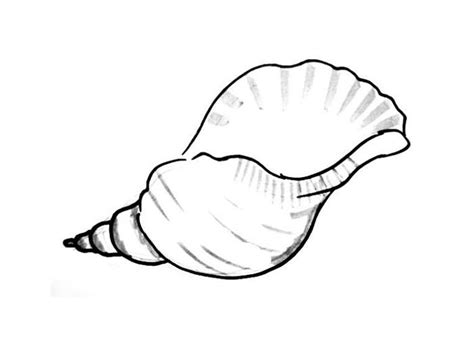 in an coloring book with relaxing and beautiful coloring pages books sea shell coloring pages