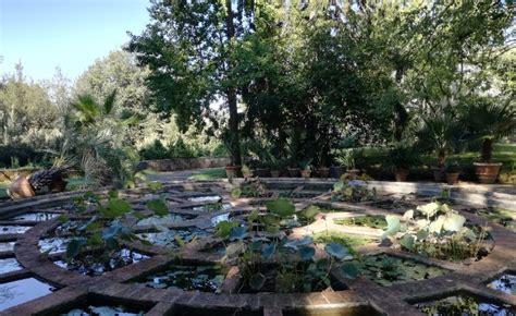 giardino boboli pianta di fronte alle piante ciclo di incontri a cura di paolo