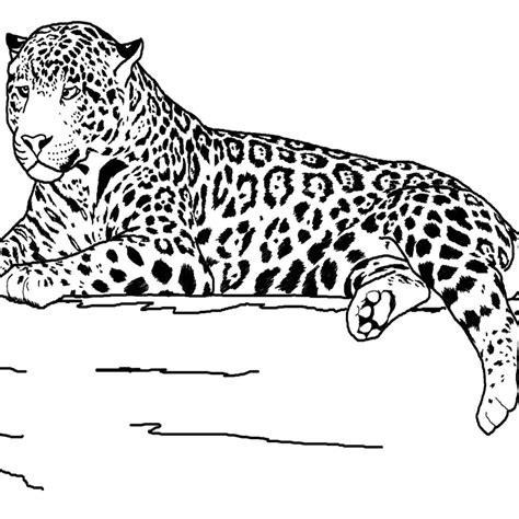 Free Coloring Pages Of Detailed Animals Realistic Coloring Pages Of Animals