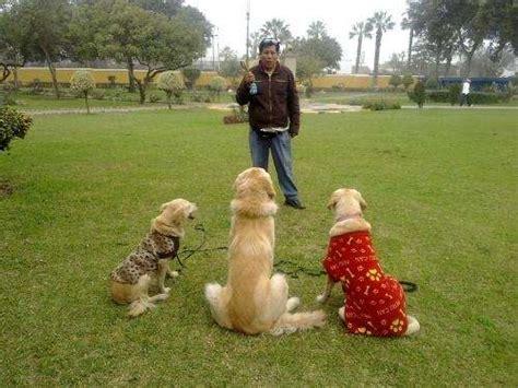 perros todas clases todas clases de perros imagui