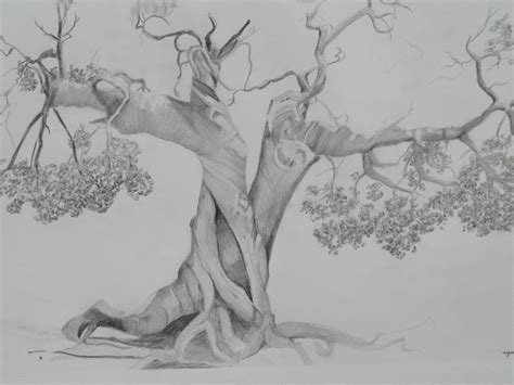 Sketches A Drawing by Pencil Drawings Pencil Drawings Of Trees