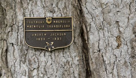 white house to remove historic jackson magnolia