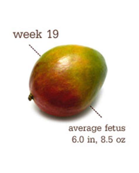 fruit 19 weeks friday s fruit week 19